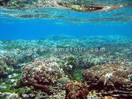 โลก ใต้ น้ำ เกาะ สิมิ ลัน